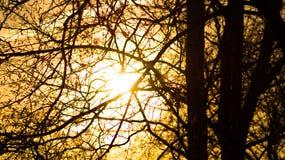 Деревья 14 Стоковые Фотографии RF
