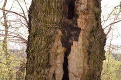 Деревья 15 Стоковая Фотография RF