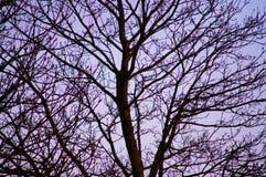 Деревья 16 Стоковые Изображения RF