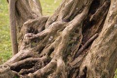 Деревья 17 Стоковые Изображения RF