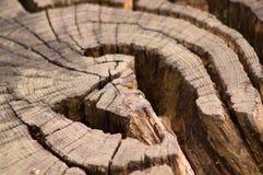 Деревья 18 Стоковое Фото