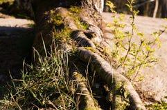 Деревья 20 Стоковые Изображения