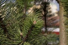 Деревья 22 Стоковое Изображение RF