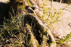 Деревья 23 Стоковые Фото