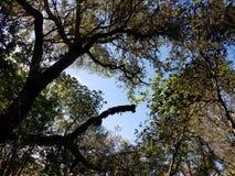 Деревья стоковое фото