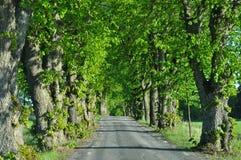 Деревья Alle Стоковое Изображение