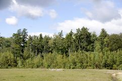 Деревья Barrens сосны Стоковое фото RF