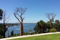 Деревья Boab Стоковое Изображение RF