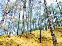 Деревья Cheed Стоковая Фотография RF