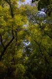 Деревья DF Мехико парка Chapultepec стоковое изображение