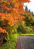 Деревья marple осени в японском саде в Берлине Стоковые Фотографии RF