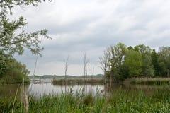 Деревья Reed подпирают заповедник озера, het Vinne, Zoutleeuw, Бельгию Стоковая Фотография