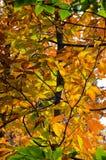 Деревья ` s падения красочные стоковые изображения