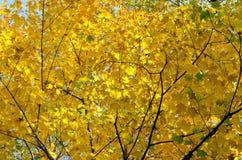 Деревья ` s падения красочные стоковое фото