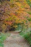 Деревья ` s падения красочные стоковые фотографии rf