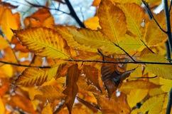 Деревья ` s падения красочные стоковое фото rf
