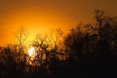 Деревья silhouette на заходе солнца Стоковое фото RF