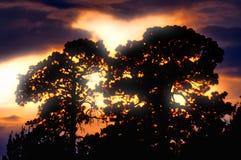 Деревья silhouetted перед проходя штормом Стоковая Фотография RF