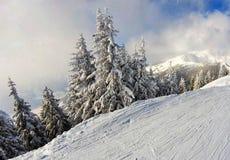 Деревья Snowy во время каникул лыжи стоковое изображение