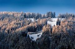 Деревья Snowy в свете утра Стоковая Фотография RF