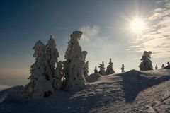 Деревья Snowy на заходе солнца Стоковое Фото