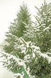 Деревья Snowy на дне Стоковые Изображения