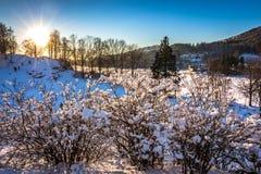 Деревья Snowy, Солнце, белый снег и голубое небо на Gamlehaugen, Бергене, Hordaland, Норвегии стоковая фотография rf
