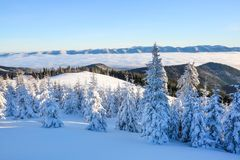 Деревья Snowy стоят на лужайке под солнцем Высокие горы покрыты с снегом Красивый зимний день Стоковые Изображения RF