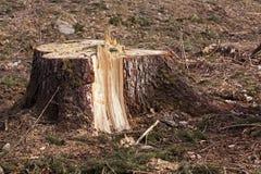 Деревья Srubleenny stubs Стоковые Изображения RF