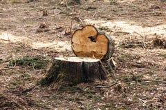 Деревья Srubleenny stubs Стоковое Изображение