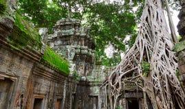 Деревья Ta Prohm, Angkor Wat Стоковое фото RF