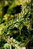 Деревья Tqaiga стоковые изображения rf