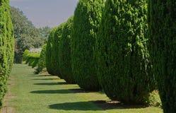 Деревья Yew в английском саде страны стоковая фотография