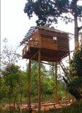 Деревянная башня вахты - наблюдательный пункт в доме лесного дерева Стоковая Фотография RF