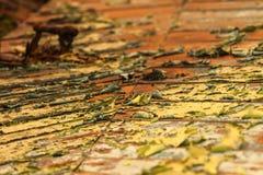 Деревянная дверь с концом краски шелушения вверх Стоковое Изображение RF