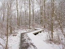 Деревянная дорожка в лесе зимы с деревьями и кустарниками предусматриванными в снеге стоковые изображения
