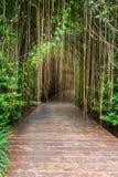 Деревянная дорожка в тропическом ботаническом саде Стоковые Изображения RF