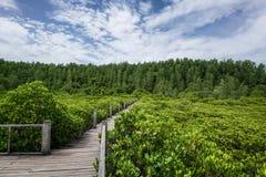 Деревянная дорожка леса мангровы моста Стоковая Фотография RF