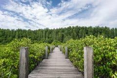 Деревянная дорожка леса мангровы моста Стоковые Изображения