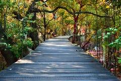 Деревянная дорожка моста в лесе мангровы Стоковое Фото