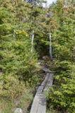 Деревянная дорожка планки на следе Стоковые Изображения