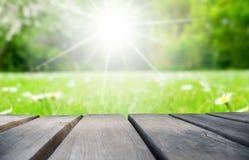 Деревянная доска с полем цветка маргаритки как предпосылка стоковая фотография