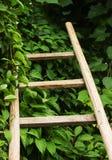 Деревянная лестница лежит на зеленых листьях Стоковые Изображения