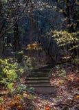 Деревянная лестница Стоковое Изображение RF
