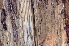 Деревянная деталь макроса крупного плана текстуры в коричневом цвете Стоковые Изображения