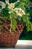 Деревянная живописная корзина и букет весны белых wildflowers Дом и сад Стоковая Фотография