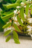 Деревянная живописная корзина и букет весны белых wildflowers тюльпаны красной весны сада цветков вишни близкие поднимают белизну Стоковые Фото