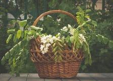 Деревянная живописная корзина и букет весны белых wildflowers Украшение для пиршества троицы Стоковые Изображения