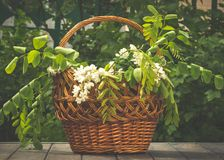 Деревянная живописная корзина и букет весны белых wildflowers Украшения летнего отпуска Стоковые Изображения RF