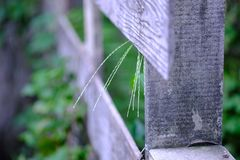 Деревянная загородка с цветками травы вытекает стоковые изображения rf
